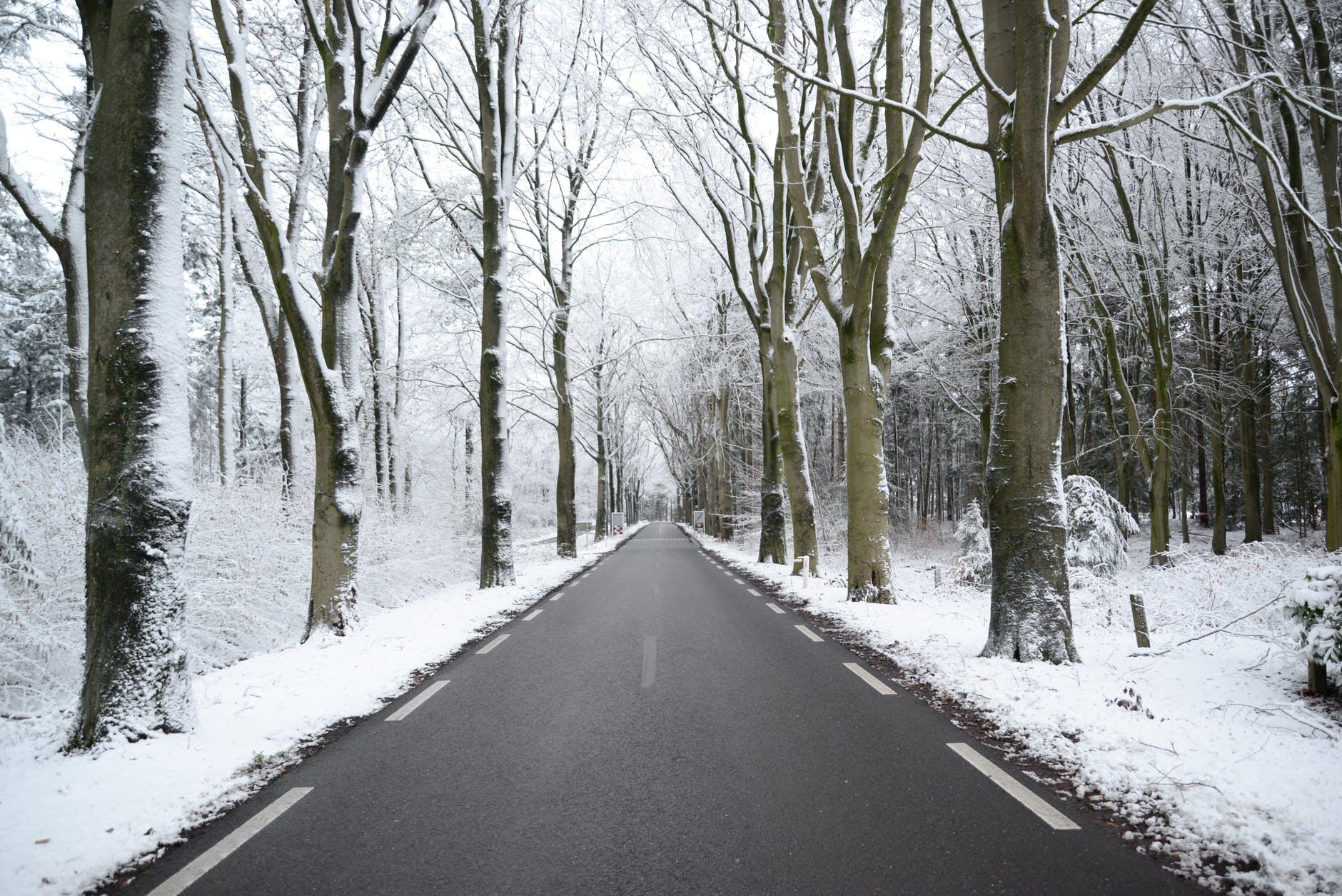 winter-frost-fog-road-735787.jpeg